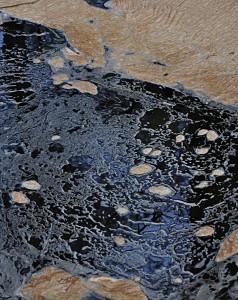janine krrekelberg